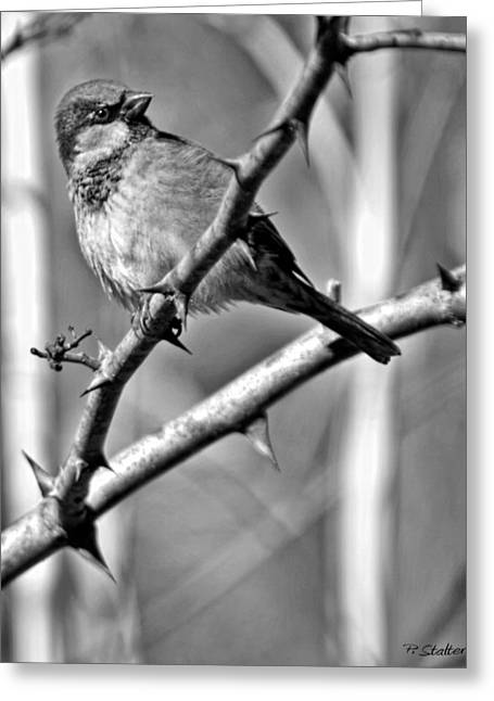 Birds. Thorns Greeting Cards - Sparrow Greeting Card by Patricia Stalter