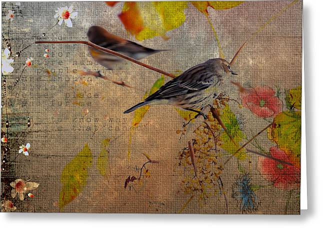Feeding Birds Greeting Cards - Sparrow Greeting Card by Todd Hostetter