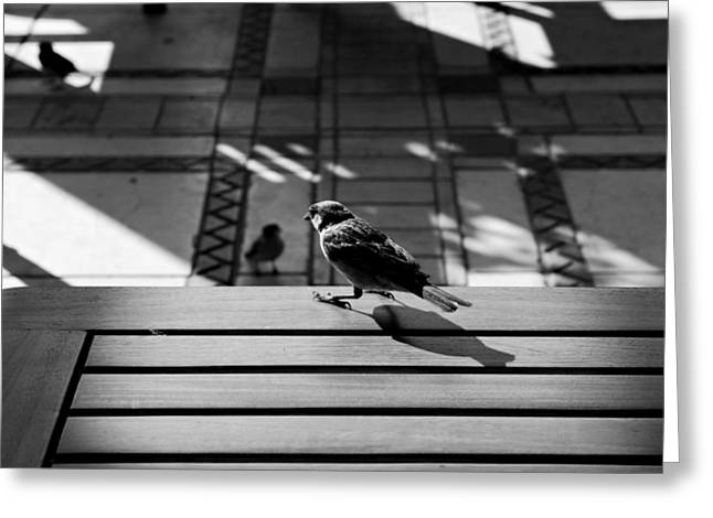 Sparrows at My Table Greeting Card by Dean Harte
