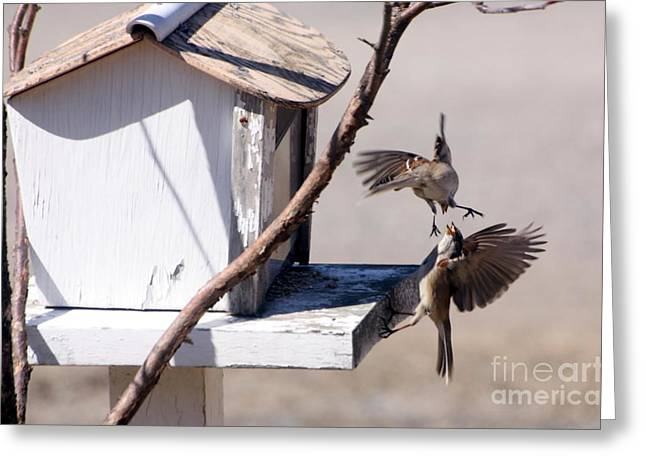 Sparrows in Fight Greeting Card by Marjorie Imbeau