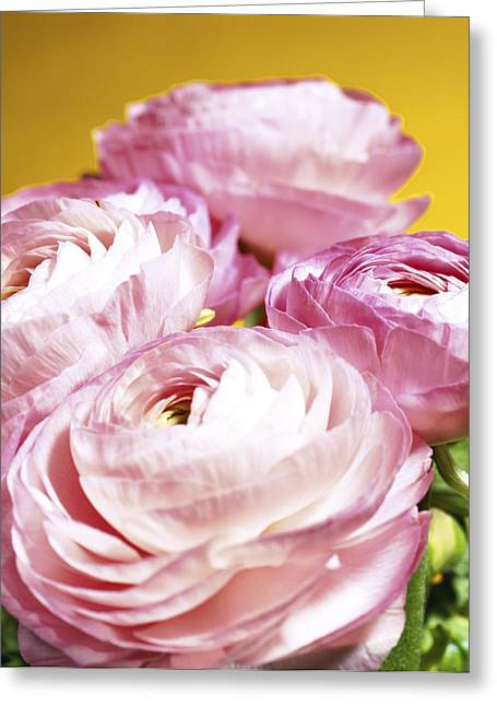 Quartet Greeting Cards - Spearworts (ranunculus Sp.) Greeting Card by Johnny Greig