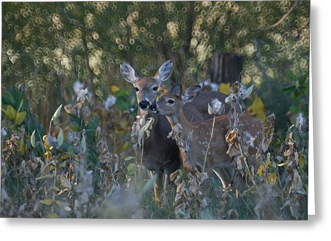 Tender Moment Greeting Cards - Special Moment Greeting Card by Ernie Echols