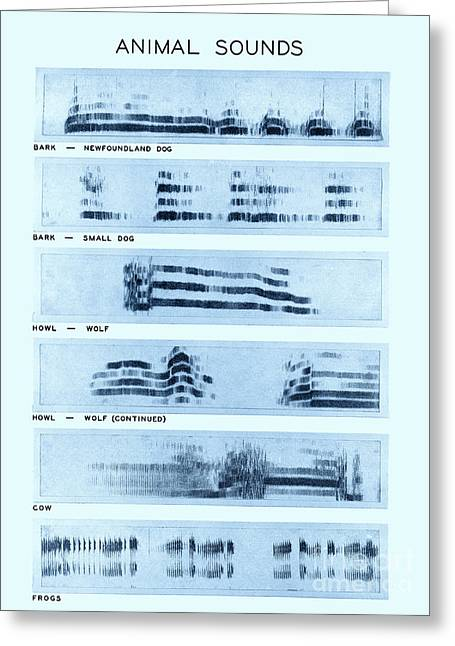 Color Enhanced Greeting Cards - Spectrogram Of Animal Sounds Greeting Card by Omikron