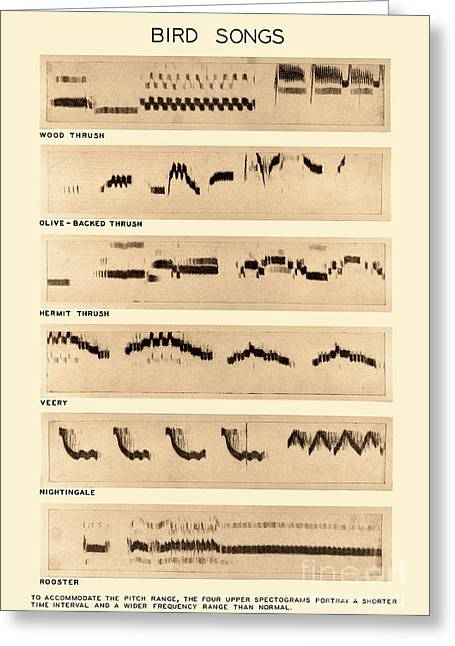 Color Enhanced Greeting Cards - Spectrogram Of Bird Songs Greeting Card by Omikron