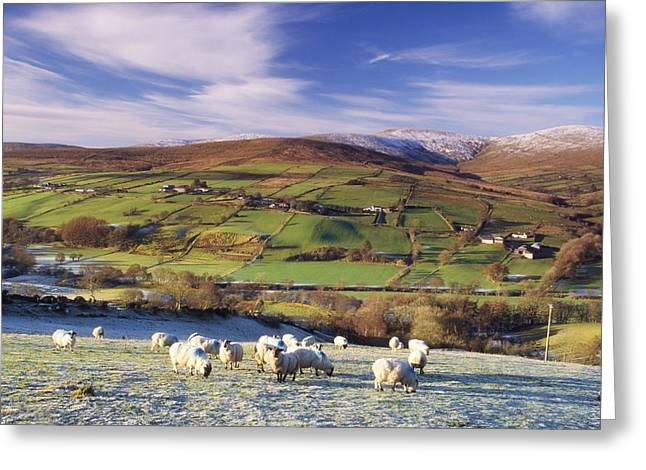 Grazing Snow Greeting Cards - Sperrin Mountains, County Tyrone Greeting Card by The Irish Image Collection