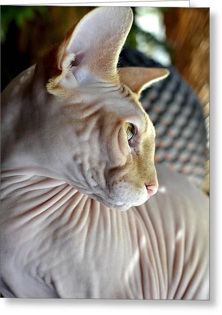 Sphynx Cat Greeting Cards - Sphynx in Profile Greeting Card by Fraida Gutovich