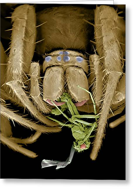 Best Sellers -  - Eating Entomology Greeting Cards - Spider Eating A Fly, Sem Greeting Card by Volker Steger