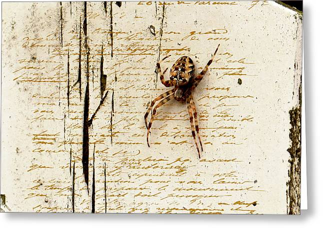 Spider Letter Greeting Card by Yvon van der Wijk