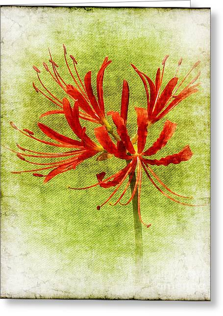 Judi Bagwell Greeting Cards - Spider Lily Greeting Card by Judi Bagwell