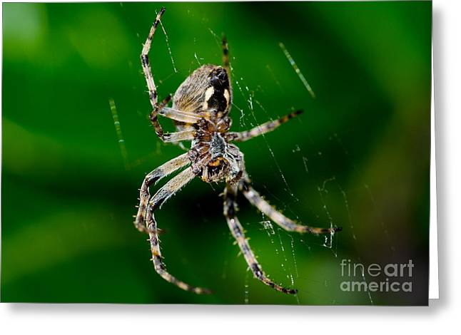 Big Spider Greeting Cards - Spider Greeting Card by Mats Silvan