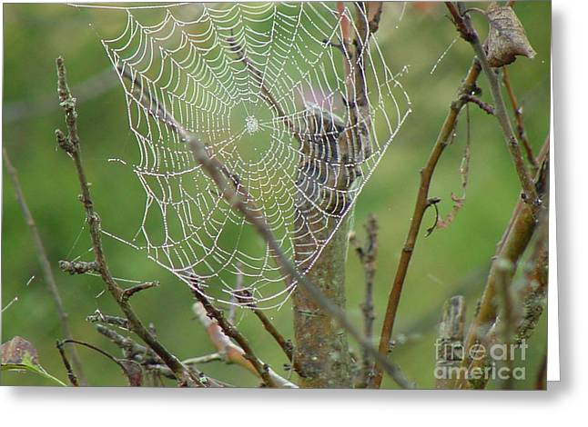Linda Seacord Greeting Cards - Spider Space Greeting Card by Linda Seacord