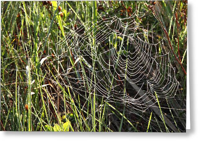 Rand Park Greeting Cards - Spider Spider Greeting Card by Igors Parhomciks