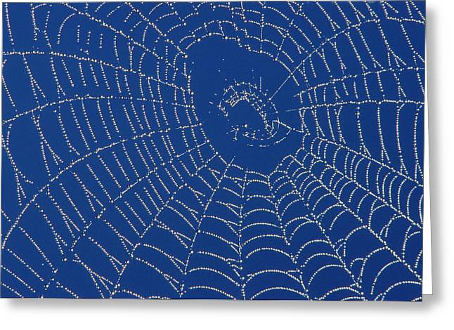Spiderwebs Greeting Cards - Spider Web Greeting Card by Mike Grandmailson