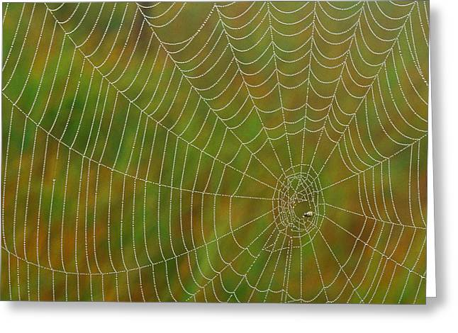 Spiderwebs Greeting Cards - Spider Web, Tilton Lake, Sudbury Greeting Card by Mike Grandmailson