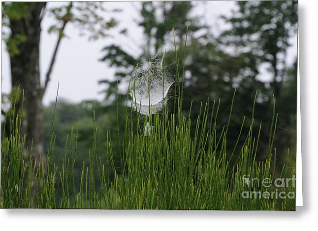 Linda Seacord Greeting Cards - Spiders Net Greeting Card by Linda Seacord