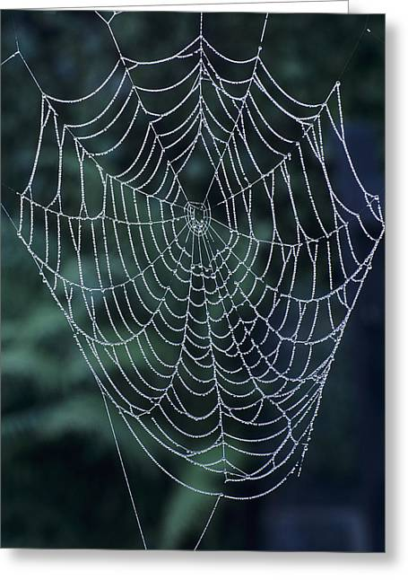 Spun Web Greeting Cards - Spiders Web, Covered In Dew Greeting Card by David Aubrey