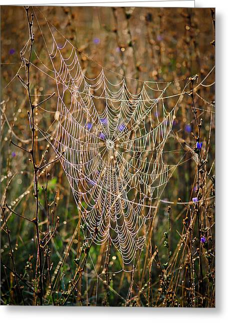 Swift Family Greeting Cards - Spiders Web Greeting Card by Swift Family