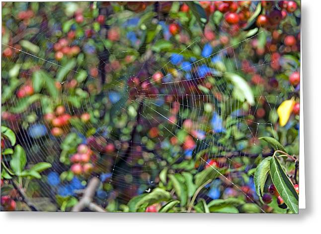 Spun Web Greeting Cards - Spiderweb Greeting Card by Georgette Douwma