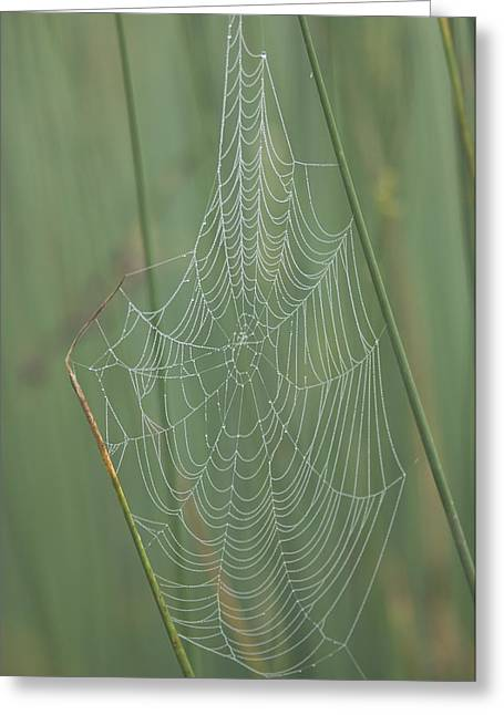 Spiderwebs Greeting Cards - Spiderwebs Laden With Dew On A Foggy Greeting Card by Joel Sartore