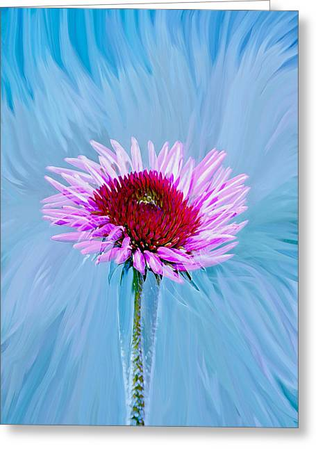 Floral Photographs Digital Greeting Cards - Spin Me Greeting Card by Linda Sannuti