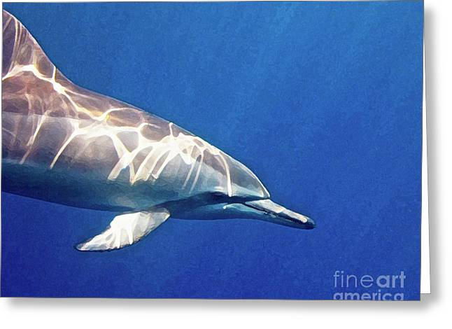 Spinner Dolphin Greeting Cards - Spinner Dolphin Greeting Card by Bette Phelan