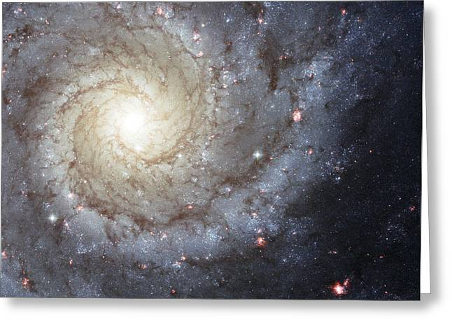 Constellations Greeting Cards - Spiral Galaxy M74 Greeting Card by Stocktrek Images