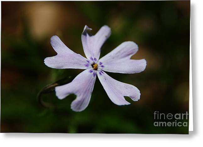 Wildflowers Greeting Cards - Spiral Greeting Card by Neal  Eslinger