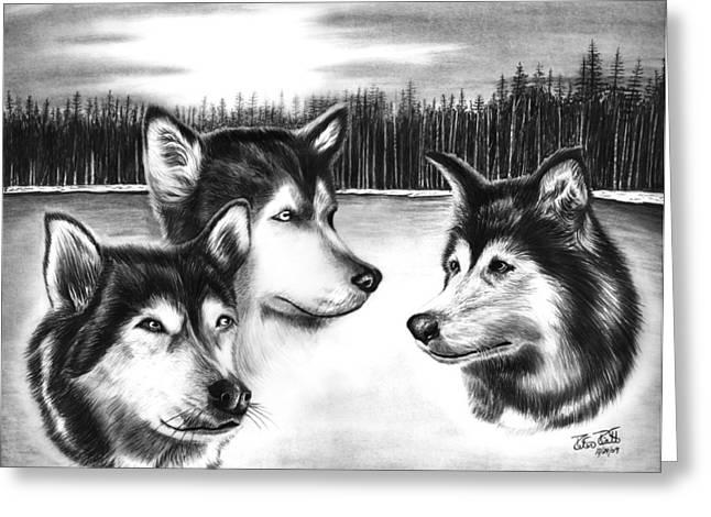 Husky Drawings Greeting Cards - Spirit Guides  Greeting Card by Peter Piatt