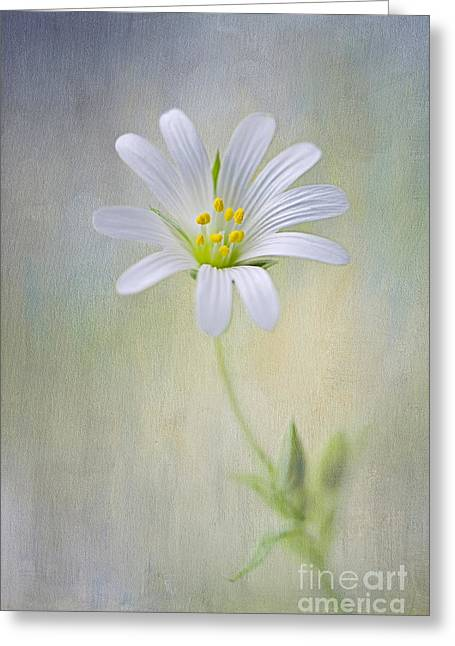 Spirit Of Spring Greeting Card by Jacky Parker