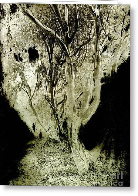 Duo Tone Greeting Cards - Spirit Tree Greeting Card by Paul W Faust -  Impressions of Light
