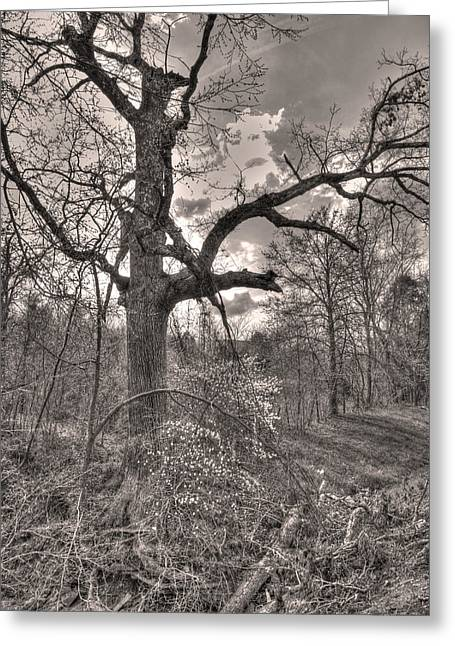 Oread Greeting Cards - Spirit Tree Greeting Card by William Fields