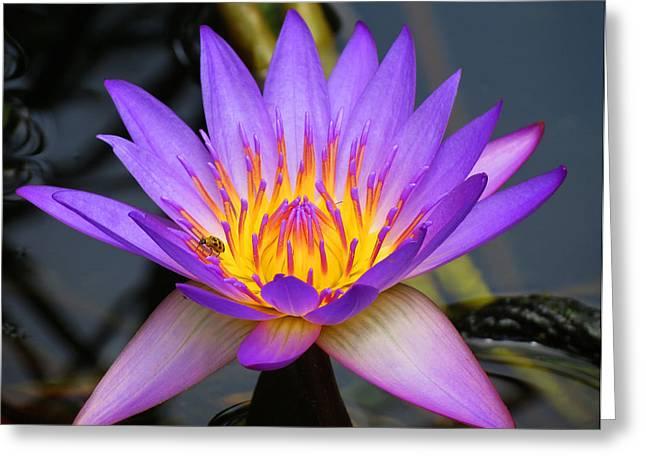 Yellow Chakra Greeting Cards - Spiritaul Violet lily Greeting Card by Vijay Sharon Govender
