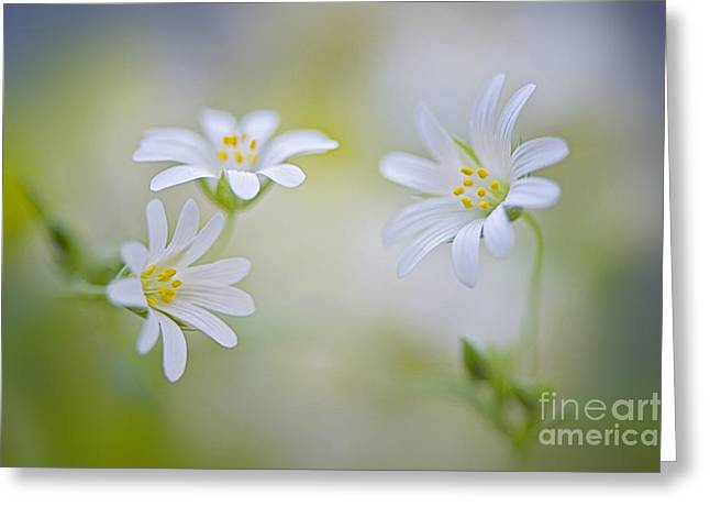 Close Focus Floral Greeting Cards - Spirits of spring Greeting Card by Jacky Parker