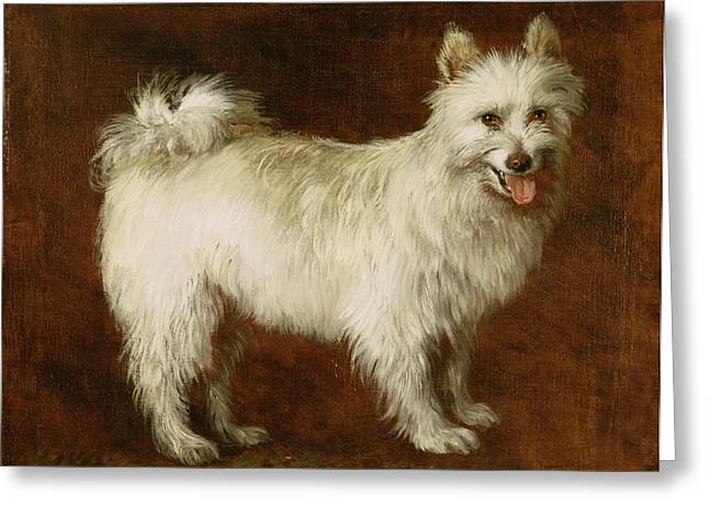 Puppies Paintings Greeting Cards - Spitz Dog Greeting Card by Thomas Gainsborough