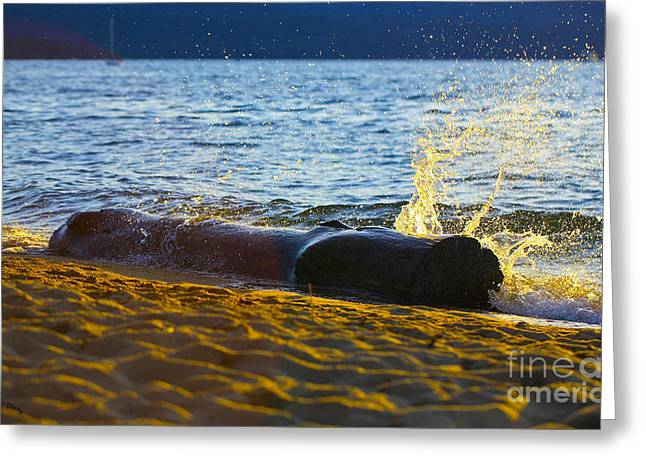 South Lake Tahoe Greeting Cards - Splash Greeting Card by Cheryl Young