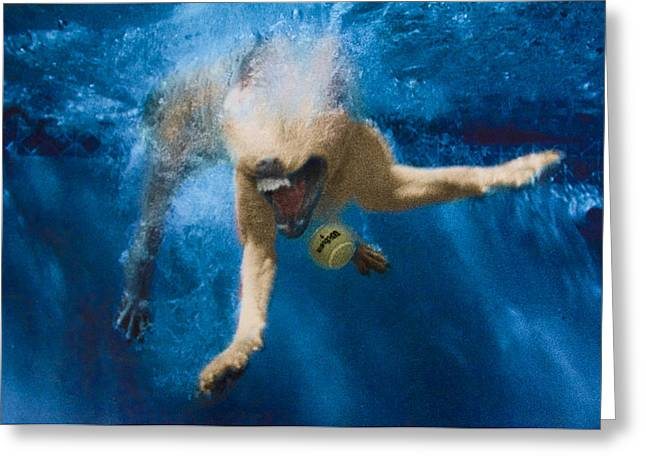 Diving Dog Greeting Cards - Splashdown 2 Greeting Card by Jill Reger