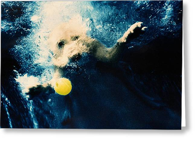 Underwater Dog Greeting Cards - Splashdown Greeting Card by Jill Reger