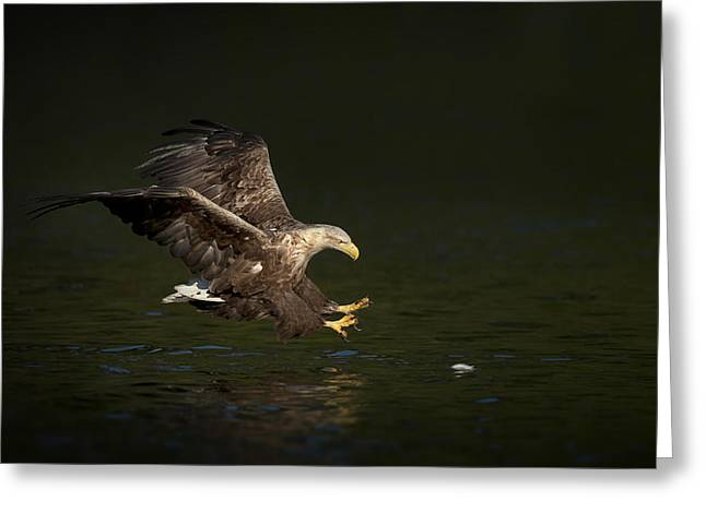 Low Wing Photographs Greeting Cards - Split Second Timing Greeting Card by Andy Astbury