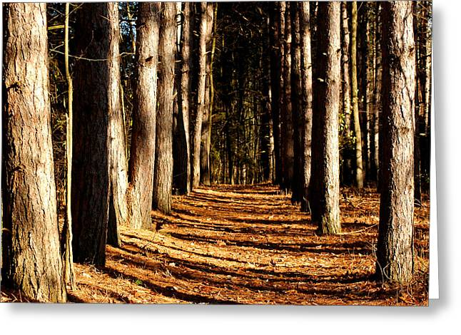 Spnc Tunnel Of Trees Greeting Card by LeeAnn McLaneGoetz McLaneGoetzStudioLLCcom