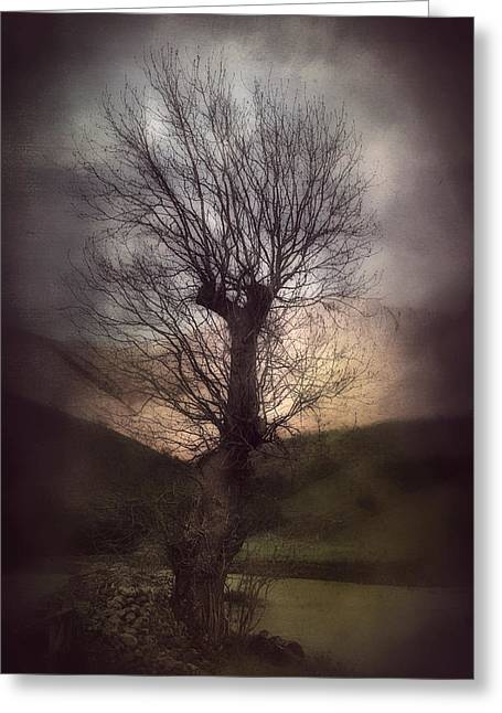 Bare Trees Greeting Cards - Spook-Tree Greeting Card by Svetlana Sewell