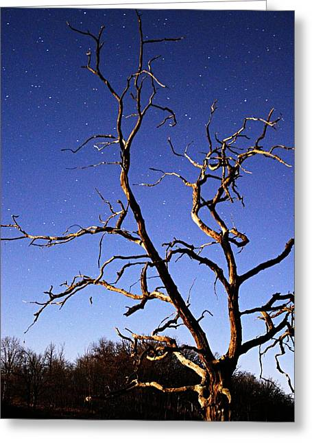 Moonlit Night Greeting Cards - Spooky Tree Greeting Card by Larry Ricker