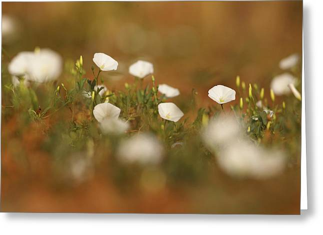 Pure Pyrography Greeting Cards - Spots Of White Greeting Card by Alon Meir