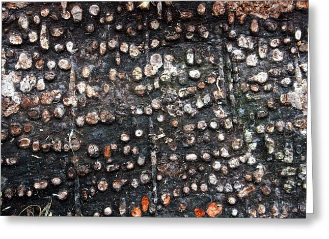 Green Day Greeting Cards - Spotted Bark Greeting Card by Jennifer  Bright