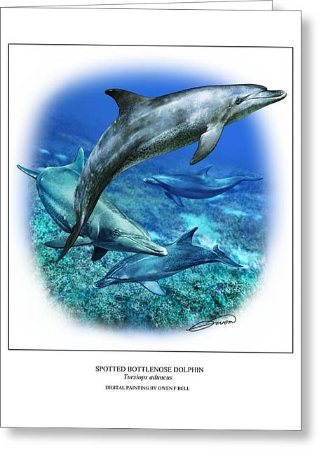 Ocean Mammals Greeting Cards - Spotted Bottlenose Dolphin Greeting Card by Owen Bell