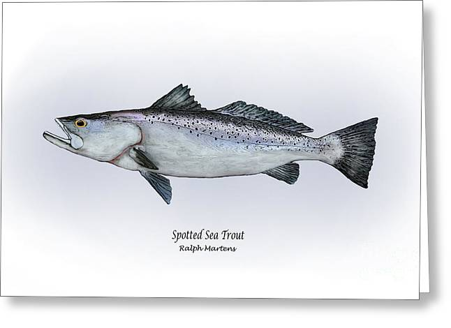 Trout Fishing Drawings Greeting Cards - Spotted Sea Trout Greeting Card by Ralph Martens