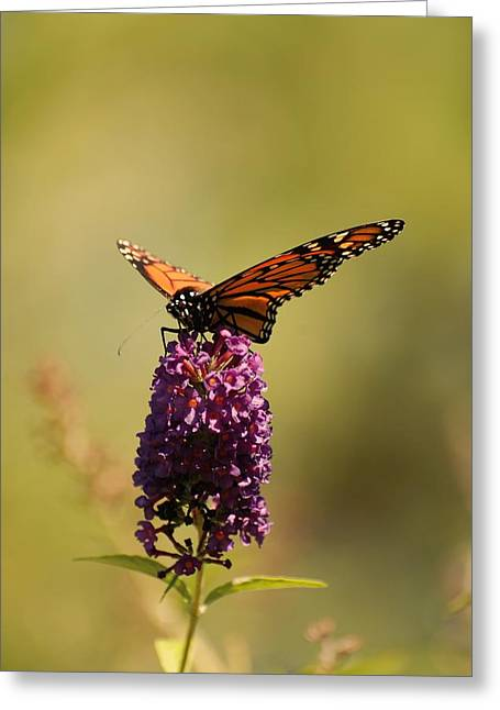 Sunlight On Flowers Greeting Cards - Spread Your Wings And Fly Greeting Card by Angie Tirado
