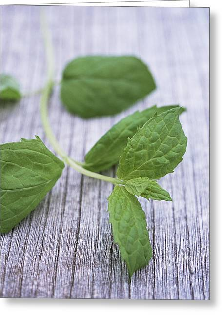 Spearmint Greeting Cards - Sprig Of Mint Greeting Card by Maxine Adcock