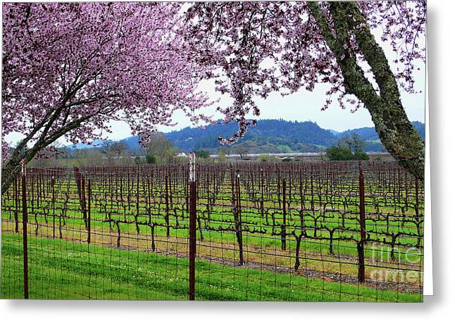 Calistoga Greeting Cards - Spring Blossoms Near Calistoga Greeting Card by Charlene Mitchell