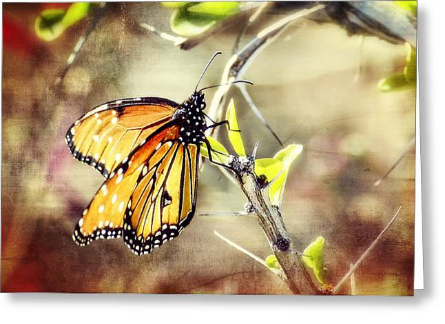 Queen Butterfly Greeting Cards - Spring Butterflies  Greeting Card by Saija  Lehtonen