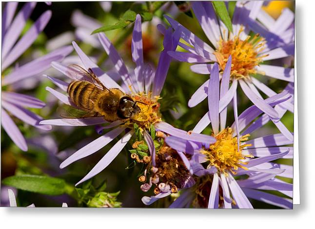 Spring Buzz Greeting Card by Don and Carol Todd